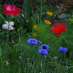 Blumenwiese thumbnail