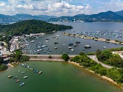 DJI_0646 (稀有魚類2) Tags: hongkong newterritories hk
