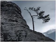 Last Tree Standing... (kurtwolf303) Tags: hill tree sky landscape natur nature omd olympusem1 mft kurtwolf303 microfourthirds micro43 entsättigt monochrome mountain landschaft