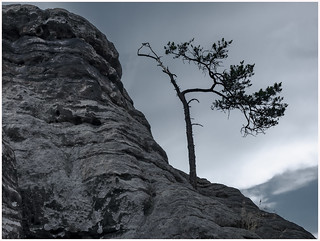 Last Tree Standing...