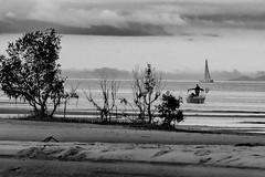...from Buckley's Hole (Fat Burns ☮) Tags: landscape blackandwhite bw nikond500 sigma150600mmf563dgoshsmsports sea ocean bribieisland clouds cloudy boat pumistonepassage mangrove sailingboat beach