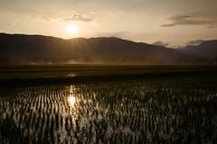 Sunset in paddy field (kat-taka) Tags: ã¬ãã sunset gold sunshine paddy country water iwate morioka mountain tree shadow fog