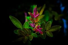 Metamorfose de cores (salezio wagner) Tags: cores planta natureza