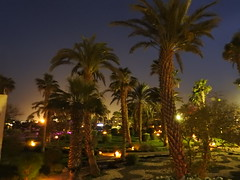 Colorful Egyptian night (azalicja) Tags: egypt safaga redsea night nature tree light