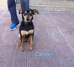 FELIZ SÁBADO ANIMAL AMIG@S. (CarmenCordero1949) Tags: perro carmen