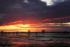 *** (pszcz9) Tags: polska poland przyroda nature natura naturaleza nationalpark parknarodowy ujściewarty wartamouth zachódsłońca sunset chmury cloud woda water odbicie reflection beautifulearth sony a77 pejzaż landscape