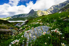 mountain flowers (Plamen Troshev) Tags: rocks mountain landscape lake snow flowers waterfall reflection adventure new nature sky clouds 7th lakes