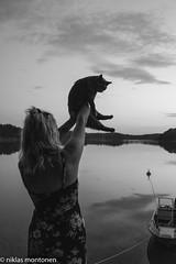 The Cat (aixcracker) Tags: katt cat kissa animal djur eläin pellinge pellinki archipelago skärgård saaristo sea hav meri boat båt vene porvoo borgå suomi finland july juli heinäkuu summer sommar kesä evening kväll ilta nikond500