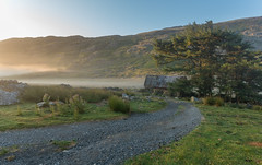 The Lodge (Rob Pitt) Tags: wales north road trip mountain cymru rob pitt photography snowdonia landscape a7rii sony grass field sky camping 1740 f4 l mist morning sunrise capel curig animal water sunset fog