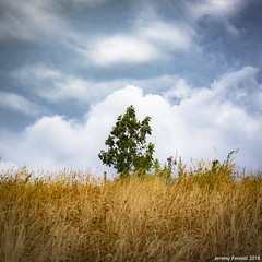On Narroways Hill (zolaczakl) Tags: bristol stwerburghs narrowayshill 2018 july photographybyjeremyfennell nikond7200 urbannature england uk nikonafsnikkor50mmf18glens tree grassland
