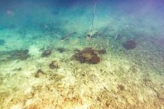 Underwater Heron Island-26 (Quick Shot Photos) Tags: australia canon canoncollective greatbarrierreef heronisland queensland underwater bogie au