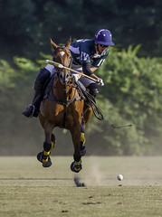 Airborne Polo (crabsandbeer (Kevin Moore)) Tags: horse ladew maryland people polo pony sports summer speed dof mallet frozenaction fast action baltimore gallop equestrian