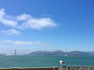 A bird and the bridge