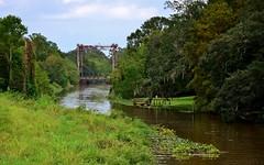 Born on the Bayou (Perfect Gnat) Tags: usa louisiana la bayou breauxbridge bridge teche river trees green summer sunshine forest cajun swamp