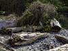 New life appearing (Tony Tomlin) Tags: crescentbeachbc britishcolumbia canada southsurrey driftwood logs pebbles