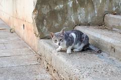 Stairs cat (hey tiffany!) Tags: beirut cat lebanon