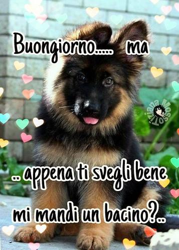 Buongiorno Link Divertenti Puppies Kiss Love Animal