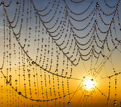 Dewdrops (adrians_art) Tags: cobwebs dewdrops dew spidersweb waterdroplets reflections silhouettes shadows curves lines patterns abstract sky clouds sunrise dawn gold yellow red orange blackandwhite blue macro design circles round