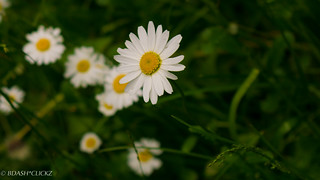 Flower_Bright