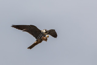 Hobby catching a bug