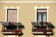 Windows (Alan1954) Tags: leon spain flowers holiday 2017 windows dwwg