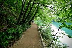 Sendero en el bosque (pepelara56) Tags: lago lake bosque forest camino sendero reflejos penumbra árboles