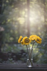 (Melinda G Pix) Tags: forest blooms flowers nature sunflowers