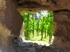 Hidden Vinyard - Pompeii (Sunderland Shutterbug) Tags: pompeii italy ruins vinyard wall view history nature vine wine beauty growing green grapes fruit window vista agriculture panasonic 自然 प्रकृति príroda ธรรมชาติ природа natura طبیعت természet φύση laadi natureza vinhedo виноградник viñedo تاکستان vingård 포도 원 vinice italia itálie איטליה 이탈리아 ایتالیا италия อิตาลี itālija 義大利 ιταλία yr eidal ポンペイ yreidal pompeya помпеї flickr smugmug گر شهر پمپی بومبي pompeia pompeji pompeje vacation holiday pompei sunny summer sommer