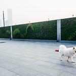 上海,街頭速寫 thumbnail