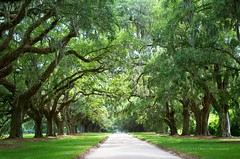 Boone Hall plantation (Jocelyne Deneau) Tags: boonehall plantation oaks summer southcarolina