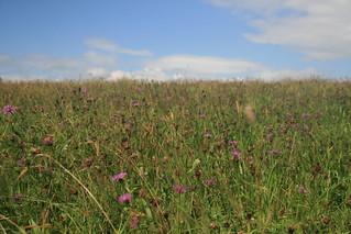 Meadow near Lower Coppice
