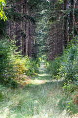 Grass path (Photography by Martijn Aalbers) Tags: forest bos trees bomen leaves bladeren green groen branches takken path pad walk wandeling nature natuur colour kleur color sunny zonnig summer zomer light licht shadow schaduw canon eos 77d ef70200mm f4l is usm wwwgevoeligeplatennl utrechtseheuvelrug netherlands