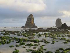 The Needles (altfelix11) Tags: oregon cannonbeach pacificocean beach ocean clouds sky haystackrock clatsopcounty gull birds
