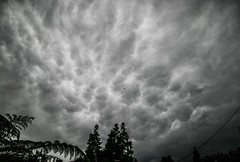 A Wet Auckland morning, NZ, July 2018 (bishop.mark95) Tags: auckland newzealand clouds markbishop blackwhite