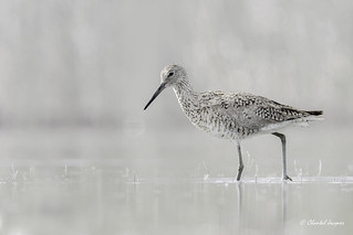 In a High-Key Mood- Willet