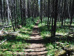 Time to stop for a bite to eat. (davebloggs007) Tags: hiking mountains alberta canada kananaskis 2018 forest path trail