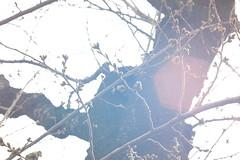 The spring light (しまむー) Tags: fujifilm xe2 minolta mc rokkor pf 58mm f14 proneg hi holiday pass shimokita hachinohe 下北 八戸