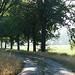Quiet Morning (Greet N.) Tags: landscape drenthe morning summer road trees grass rural