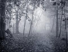 ce qui reste du nuage /  7:00 am (cébé céline) Tags: sentier montagne montroyal arbres paysage brume nuage 7am aube forêt forest path mountain mont royal trees landscape mist cloud dawn wood montréal