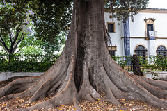 the old tree and the art...... (barfi*) Tags: tree art sevilla andalusia