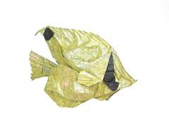 Threadfin Butterflyfish (folding~well) Tags: origami paper folding butterflyfish fish