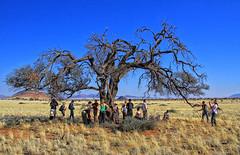 Shadow // Schatten (Zoom58.9) Tags: bäume steppe landschaft natur gräser trees landscape nature grasses africa namibia kalahari canon eos safari people