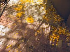 Yellow Snow (MPnormaleye) Tags: iphone utata yellow pavement bricks patterns shadows utata:project=tw626