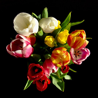 Tulips , bouquet rainbow