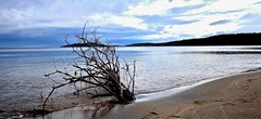 DESERTED, SANDY BEACH, LAKE SUPERIOR, ONTARIO, CANADA near MICHIPICOTEN FIRST NATIONS, ONTARIO, CANADA, ACA PHOTO (alexanderrmarkovic) Tags: deserted sandybeach lakesuperior ontario canadanearmichipicotenfirstnations canada acaphoto