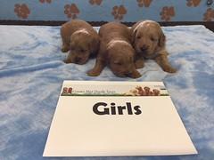 Dakota Girls pic 2 4-22