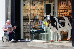 Silly Cow (Maskedmarble) Tags: spain cartagena shop reader cow