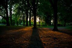 Lange Schatten (Rasande Tyskar) Tags: sunset sonneuntergang sonne wald bäume regenbogen farben colours grass prisma wood woods