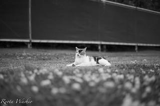 Stray Cat -black and caramel-