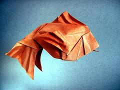 Taiwan Goldfish, Opus 716 - Robert Lang (Rui.Roda) Tags: origami papiroflexia papierfalten fish pez peixe poisson taiwan goldfish opus 716 robert lang